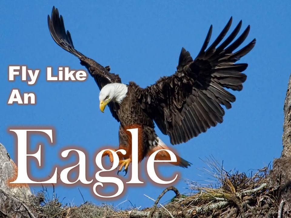 nfl forums eagle bet